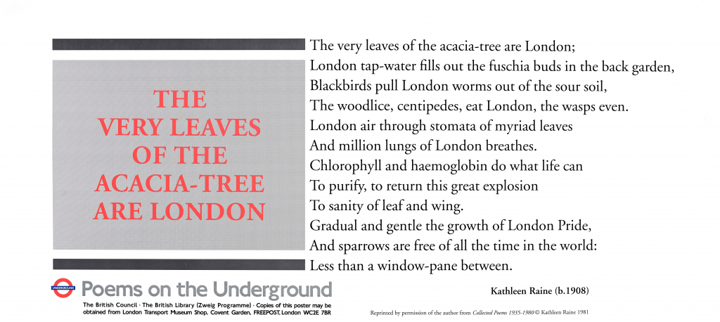 Kathleen Raine, The Very Leaves of the Acacia-Tree are London ' The very leaves of the acacia-tree are London; London tap-water fills out the fuchsia buds in the back garden, Blackbirds pull London worms out of the sour soil, The woodlice, centipedes, eat London, the wasps even. London air through stomata of myriad leaves And million lungs of London breathes. Chlorophyll and haemoglobin do what life can To purify, to return this great explosion To sanity of leaf and wing. Gradual and gentle the growth of London pride, And sparrows are free of all the time in the world: Less than a window-pane between.'